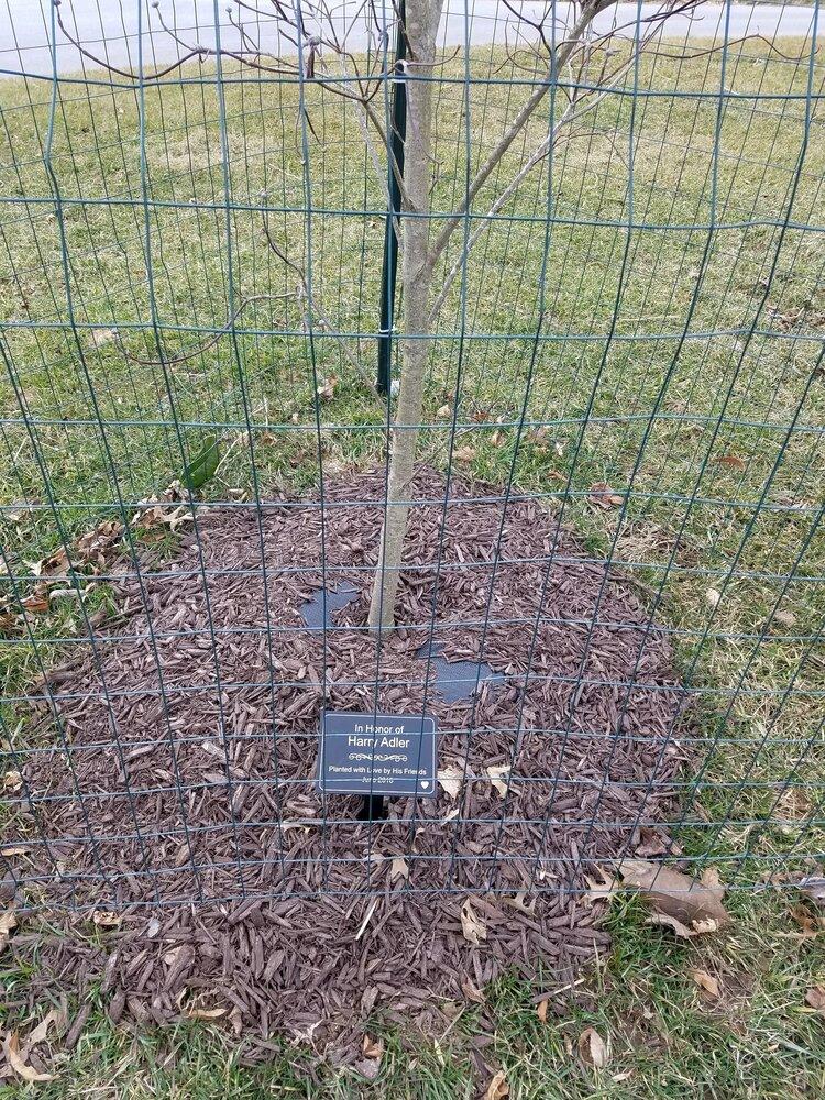 Tree Plaque Sponsorship, Belmont Manor