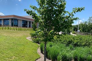 Tree Hugger Sponsorship, Elkridge Library