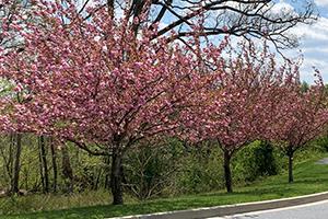 Tree Hugger Sponsorship, Meadowbrook Park