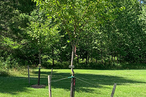 Tree Hugger Sponsorship Rockburn Park