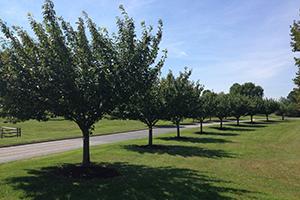 Tree Hugger Sponsorship, Schooley Mill Park