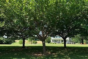 Tree Hugger Sponsorship, Senator Clark Memorial Grove (West Friendship)